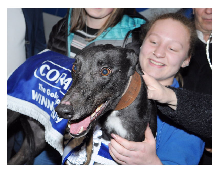 Welcoming the next generation of greyhound trainers: an apprentice's story